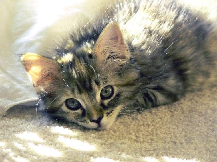 Puppy & Kitten Scam PR